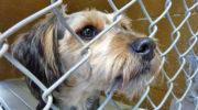 Обязательную передачу бесхозных животных в приюты отложат на два года