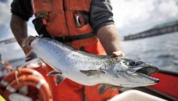 К эко-продукции хотят отнести дикую рыбу