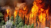 Борьбу с лесными пожарами хотят сделать обязательной вне зависимости от экономической целесообразности