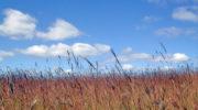 Неиспользуемые земли хотят изымать в упрощенном порядке