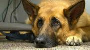 За жестокое обращение с животными предлагается наказывать с 14-ти лет