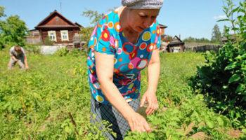Объединения садоводов получили льготы по налогу на прибыль