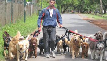 Налога на собак в России не будет, по крайней мере, в ближайшее время